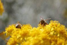 Animal Photos - Bee