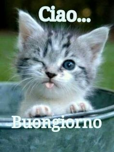 182 Best Italian Buongiorno Images In 2020 Buongiorno Good Morning Italian Memes