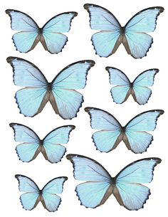 FREE Butterflies - By Lisa Gregory