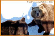 Portfolio Multimedeia: Karhut ovat todella heränneet! Kevät on tullut!