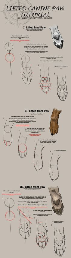 You must download the tutorial for full size and high quality! So I saw that most of my followers wanted more tutorials and one of the asked for a lifted paw tutorial so here you go! The paw is als...