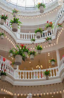 hanging bromeliads