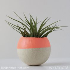 Melon Air Plant Pot with Air Plant by BirdAndFeatherCo on Etsy