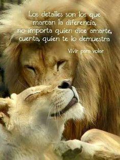 Tiger Love, Lion Love, Unexpected Friendship Quotes, Illusion Quotes, Lion Photography, Lion Quotes, Lion Painting, Don Juan, Majestic Animals