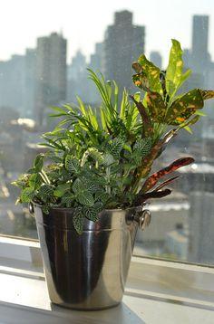 Handmade Plant Arrangement in Champagne Bucket