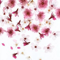 blossoms...artist Bridget Beth Collins