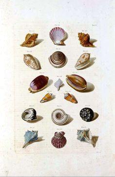 love seashells!