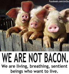 We are not bacon! We are living, breathing, sentient beings who want to live! GO VEGAN