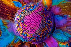 The art of science: Stunning, psychedelic images from Fabian Oefner-Millefiori No. 01 Ferrofluid is a magnetic, hydrophobic liquid that forms colorful curves and channels when deposited onto a magnet a. Foto Fun, Acid Trip, Science Art, Science Photos, Science Topics, Weird Science, Ted Talks, Watercolour Painting, Watercolors