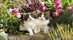 Baixar Supercute Kittens Windows 7 Theme, Download é no Zigg!
