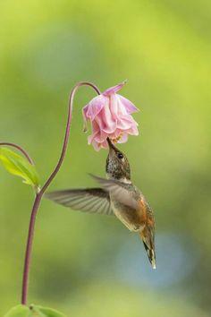 Humming bird                                                       …