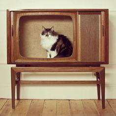 original cat house?