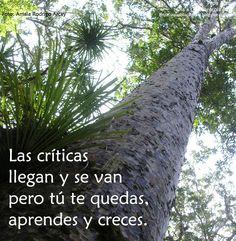 Colección de frases de Pepa Arcay De Ola a Ola Caracola Blog http://olaaolacaracola.blgospot.com.es/