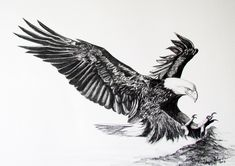 Items similar to Bald Eagle~ Flying~ Bird of Prey~ Limited Edition Print Signed & Numbered by Artist Sheri-Lynn Marean on Etsy - Tattoo Designs Men Eagle Back Tattoo, Eagle Chest Tattoo, Bald Eagle Tattoos, Tribal Tattoos, Black Eagle Tattoo, Celtic Tattoos, Tattoos Lobo, Wolf Tattoos, Tatoos