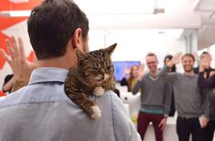 Lil Bub's Day At The Office