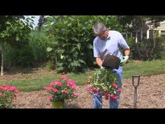 Care of Knock Out Roses: How To Plant a Container Knock Out® Rose