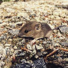 Myška 😀 #mouse #nature
