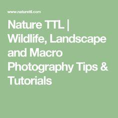 Nature TTL | Wildlife, Landscape and Macro Photography Tips & Tutorials