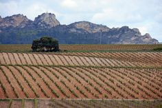 Welcome to Rioja Roundup, our 6-day tour in #Spain's most historic #wine region.