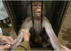 Please sign any petition you see or take action to help end animal experimentation once and for all.
