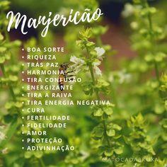 Wicca, Magick, Tea Plant, Maria Montessori, Book Of Shadows, Garden Plants, Reiki, Spelling, Mystic
