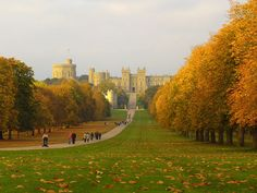 the long walk in Windsor, beautiful for an autumn picnic with champagne and strawberries ;)