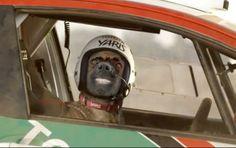 Buddy driving Toyota Yaris