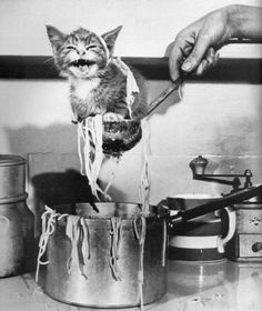 shesso20thcentury:  you are not pasta or even italian, you are a cat.  Lunch!