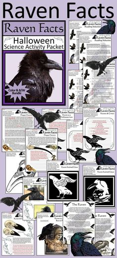 Raven Facts Halloween Activity Packet: Activity packet teaching your students all about the raven.  Contents include: * Raven Facts Reading selection & Quiz * Raven and Crow Skull Comparison * Identifying Ravens & Crows * Raven in Mythology * Create Your