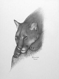 """Limited Edition Print """"Cougar"""" (Unframed) Wildlife Art E-ArtDesign.US http://www.amazon.com/dp/B00I0E52FQ/ref=cm_sw_r_pi_dp_df08vb1EC1F0E"""