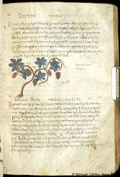 De materia medica, MS M.652 fol. 10r - Images from Medieval and Renaissance Manuscripts - The Morgan Library & Museum