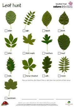 Woodland Trust - Nature detectives: Leaf hunt checklist