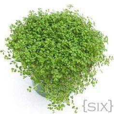 Ten Plants to Grow in Closed Terrariums & Under Cloches - sweet treats wedding Terrarium succulentes