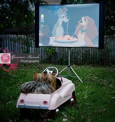 """Yorkies at the drive-in watching """"Lady and the Tramp""""..so so perfect..oh i love love this shot..thanks 4 sharing"""