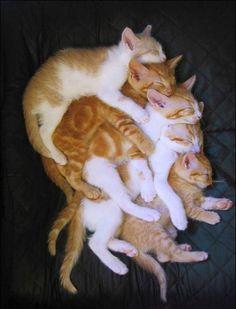 Quintuple stack of kitties.....