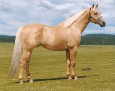 quarter horse pictures - Yahoo Image Search Results - Tammy's horse quarter horses
