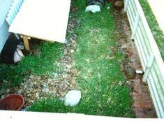 A different type of outdoor box turtle pen. Tortoise Cage, Tortoise Habitat, Baby Tortoise, Reptile Habitat, Outdoor Box, Outdoor Decor, Box Turtle Habitat, Turtle Enclosure, Eastern Box Turtle