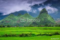Mu Cang Chai rice fields and the mountains background, Countryside landscape, Vi Póster, Lámina | Compra en EuroPosters.es