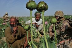 War on drugs must be Afghan top priority: UN chief