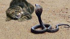 10 CRAZIEST Snake Fights Caught On Camera - Most Amazing Wild Animal Att...