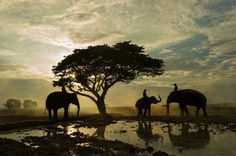 Elephant sunrise Photo by sutiporn somnam — National Geographic Your Shot