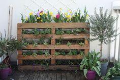 mooi en decoratieve muur van een pallet met hier planten maar je kan er ook andere spullen in stoppen.