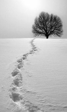 Ağaçlar - Trees