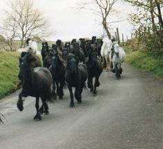 fell ponies Fell Pony, Pony Breeds, Little Falls, Beautiful Horses, Needle Felting, Faces, Animals, Pony, Pretty Horses