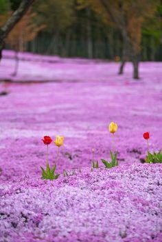 Radiant Orchid nature  | Cordillera, Colorado www.cordilleraliving.com