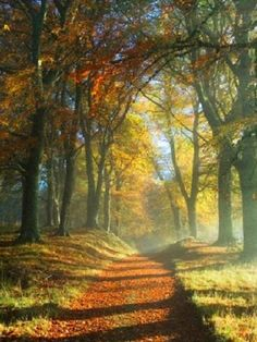 Have you ever woken up early on an autumn morning?