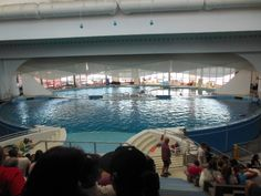 The dolphin pool and arena