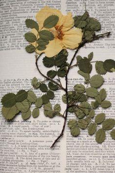 Bloom Journal  Liesl Made : Yellow Rose