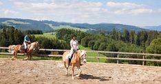 Gasthaus Sonne Neuhäusle St. Märgen Equestrian, Germany, Restaurant, Horses, Holiday, Animals, Black Forest, Bicycling, Horseback Riding