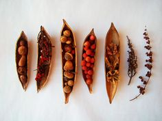 Nature Collection. Nature bits in bean pods.